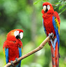 Costa Rica 8-Night Vacation w/Tours & Air