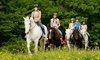 Carousel Horse Farm Coupons Casco, Maine Deals