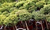Harlequin Rare Tree Nursery Coupons Westwood, Massachusetts Deals