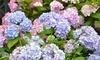 English Gardens Coupons Eastpointe, Michigan Deals