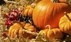 Fort Worth Fall Market Coupons Fort Worth, Texas Deals