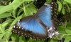 Cambridge Butterfly Conservatory Coupons Cambridge, Ontario Deals