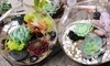 Terrarium-Making Class Coupons Washington, District of Columbia Deals