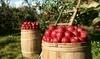Ridgefield Farm Coupons Harpers Ferry, West Virginia Deals