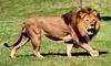 Lion Country Safari Coupons