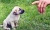 Athens Dog Training L.L.C. Coupons