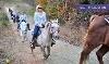 Latta Equestrian Center Coupons