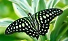 The Butterfly Place Coupons