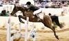 Arabian Horse Association Coupons