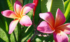 Naples Botanical Garden Coupons Naples, Florida Deals