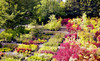 Greer Gardens Coupons Eugene, Oregon Deals