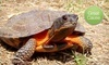 American Tortoise Rescue Coupons Malibu, California Deals