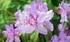 Rhododendron Species Foundation & Botanical Garden Coupons Federal Way, Washington Deals